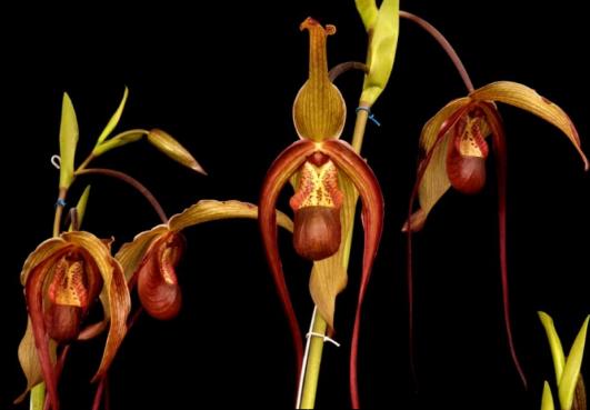 Tips para una Planta Show
